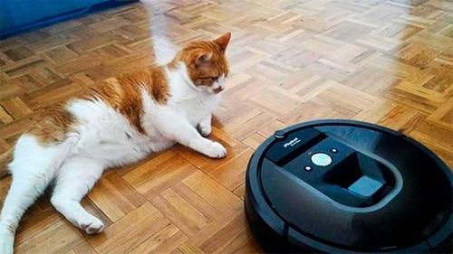 Gato frente al robot aspirador